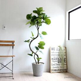 ウンベラータ 155cm 造花 観葉植物 フェイクグリーン 大型 送料無料