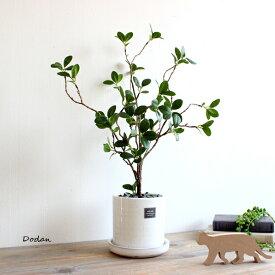 ドウダンツツジ 52cm 貫入鉢皿付 造花 インテリア 観葉植物 フェイクグリーン