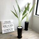 【特別価格】ストレチア 70cm 1本立 丸茶鉢 白石黒石 造花 観葉植物 インテリア 大型 CT触媒 フェイクグリーン 人工観…