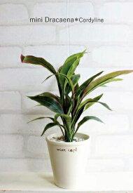 ミニドラセナ コーディライン 28cm 造花 インテリア ミニ人工観葉植物 CT触媒 フェイクグリーン