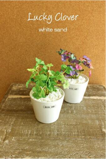 ラッキークローバーポット ホワイトサンド 白砂 造花 インテリア CT触媒 フェイクグリーン