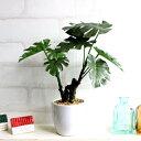 ミニモンステラ H24 観葉植物 造花 インテリア ミニ観葉 光触媒/CT触媒 フェイクグリーン