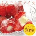 【送料無料】まるごと苺アイス 20粒 /練乳いちごアイス/アイス/イチゴ/ 05P03Dec16