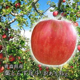 送料無料 青森県産 葉とらずサン北斗 ご家庭用5kg (約14〜18個)人気の訳ありリンゴ [※産地直送・同梱不可]