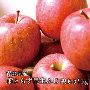 送料無料 青森県産 葉とらず早生ふじ ご家庭用約5kg (約14〜18個)人気の訳ありリンゴ 昂林 青森産 訳あり サンふじ