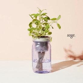 Modern Sproutモダンスプラウト「Garden Jar セージ」水耕栽培(水栽培) キットクォート メイソンジャー植物 インテリア家庭菜園 ガーデニングキッチンガーデン
