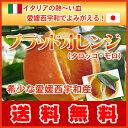 ブラットオレンジ タロッコ チャンス
