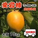 大箱10kgで送料無料・愛宕柿(干し柿用)渋柿・大箱10kg・愛媛産・ご家庭用