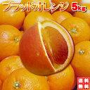 ★大箱5kg★⇒希少なブラットオレンジ(タロッコ)えひめ西宇和産一度は食べる機会のチャンス価格、送料無料