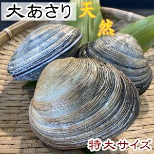 【愛知県産】【師崎漁港から直送】ひと口では食べられない大あさり 特大サイズ 1kg