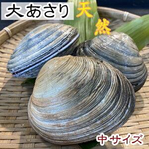 活大アサリ[大あさり] 中サイズ 1kg 天然 【愛知県産】