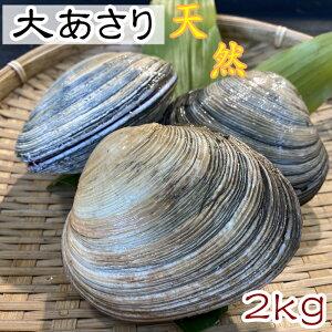 活大アサリ【大あさり】 2kg  サイズ色々!【愛知県三河湾産】 天然