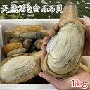 【愛知県三河湾産】天然活き白みる貝 小1kg