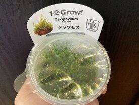 【組織培養水草】トロピカ1-2-Grow! ジャワモス