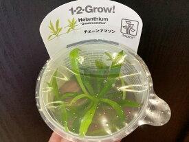 【組織培養水草】トロピカ1-2-Grow! チェーンアマゾン