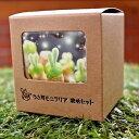 【多肉植物】【送料無料】 うさ耳 モニラリア 栽培セット プレゼント 贈答 ラッキーシール対応 簡単育成 うさぎ …