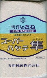 エンバク種 超極早生エンバク スーパーハヤテ隼 (1kg) 【雪印種苗】 [牧草種子]