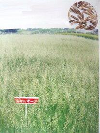 エンバク種 ニューオーツ (1kg) 【カネコ種苗】 [えんばく えん麦 エンバク 牧草種子]