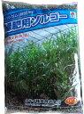 ソルゴー種 緑肥用ソルゴー (1kg)[ソルゴー ソルガム 有機 牧草種子 緑肥ソルガム]