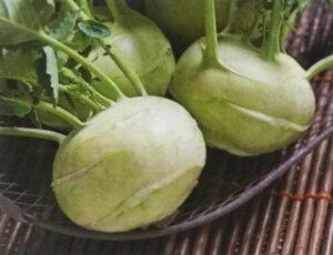 コールラビ種 グランドデューク (1.6ml)[栽培用 種子 カブカンラン]