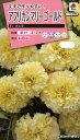 アフリカンマリーゴールド種F1バニラ(30粒) 〜花のタネ〜