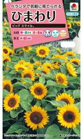 ひまわり種ビッグスマイル(2.5ml)  〜花のタネ〜