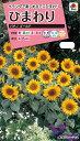 ひまわり種パチノゴールド(2ml)  〜花のタネ〜