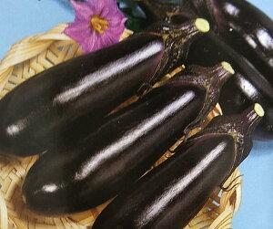 ナス種 F1 黒秀 (20ml)[栽培用 種子 なす 茄子 生産者向け]