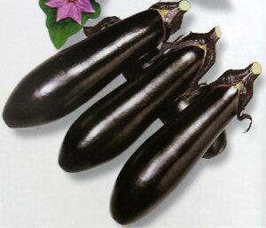 ナス種 F1 黒光 (20ml)[栽培用 種子 なす 茄子 生産者向け トーホク]