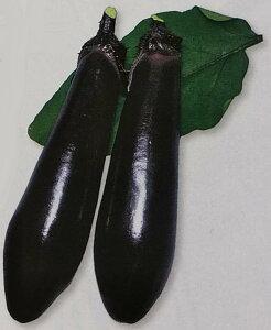 ナス種 黒陽 (70粒)[栽培用 種子 なす 茄子]