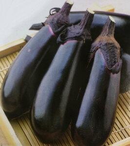 ナス種 千両二号 (60粒)[栽培用 種子 なす 茄子]