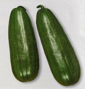 ウリ種 青はぐら瓜 (3ml)[栽培用 種子 瓜 うり トーホク]