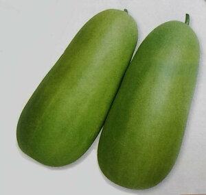 ウリ種 沼目白瓜 (500粒)[栽培用 種子 シロウリ しろうり]