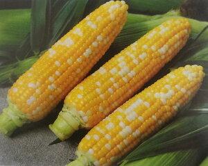 トウモロコシ種 ゆめのコーン ビッグ85(2000粒)[栽培用 種子 とうもろこし 玉蜀黍 スイートコーン 生産者向け]