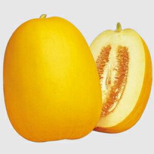 マクワ種金太郎 (300粒)まくわ まくわうり まくわ瓜 マクワウリ 栽培用