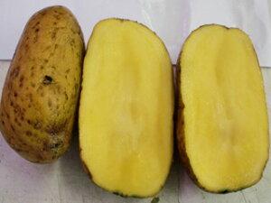 インカのめざめ じゃがいも種芋 (1kg) サイズ混合[春ジャガイモ種芋 春じゃが芋種芋 馬鈴薯種芋 ばれいしょ種芋 栽培用]