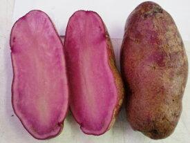 ノーザンルビー じゃがいも種芋 (1kg)サイズ混合[春ジャガイモ種芋 春じゃが芋種芋 馬鈴薯種芋 ばれいしょ種芋 栽培用]【検品合格済品】