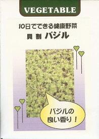スプラウト種貝割 バジル(2ml)