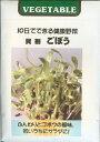 スプラウト種貝割 ごぼう(20ml)