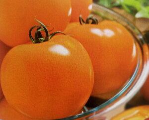 トマト種 桃太郎ゴールド(18粒)[栽培用 種子 YE004]