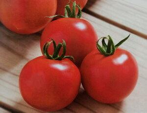 中玉トマト種 フルティカ (1000粒)[栽培用 種子 ミディトマト種 生産者向け]