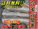 冷凍アナゴ開き2kg(Mサイズ8〜10枚位)【穴子・あなご】【北海道・本州・四国・九州は送料無料】【徳用】【数量限定】