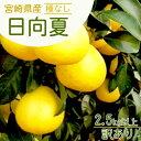 12月中旬以降発送☆ご予約受付中☆送料無料 【宮崎県産 種なし日向夏 訳あり2.5kg以上】 甘酸っぱい 爽やか 宮崎原産の希少なフルーツ ふぞろい 古傷あり デコポン ポンカン など柑橘がお好きな方にも 別名 ニューサマーオレンジ 小夏とも呼ばれています