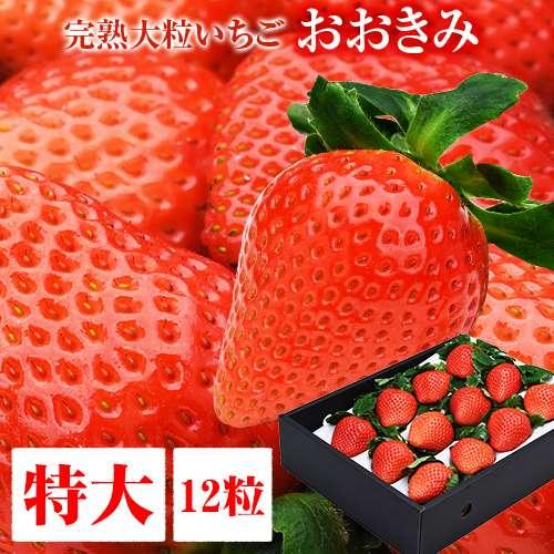 送料無料 特大サイズ 12粒 380g以上(1粒あたり30〜39g) いちご イチゴ 苺 大粒 高級 超大きくて甘い おおきみ タルト ショートケーキ の材料にも フルーツ 果物 あまおう とちおとめ あきひめ スカイベリー よりも 大きい ギフト