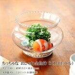 ちっちゃなおしゃれ金魚鉢ガラスクリアーS(1.3リットル)