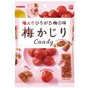 【新商品】カンロ 梅かじりキャンディ 65g×6袋 梅味キャンデー