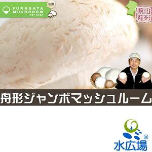 【山形県産】【産地直送】超スーパージャンボマッシュルーム(ブラウン)(直径13〜15cm)1本 送料無料
