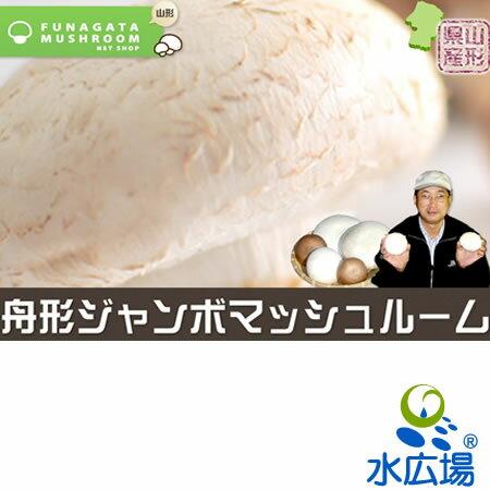 【山形県産】【産地直送】【送料無料】ジャンボマッシュルーム(ホワイト)(直径9〜10cm)×8本
