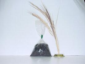 古代米(黒米) 100g 【酵素玄米用】【寝かせ玄米用】