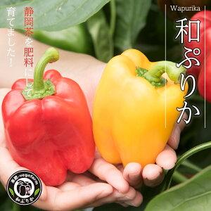 【完熟】 和ぷりか 1kg 国産 パプリカ 採れたて 野菜